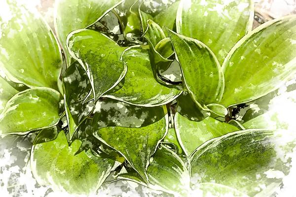 garden greens ..