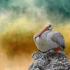 pelican posture ...