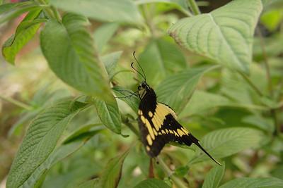 Butterfly World: Mar. 5, 2009