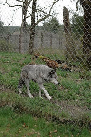 Wolf Haven - April 9, 2009