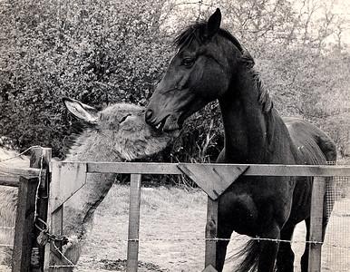 horse& donkey 1980s