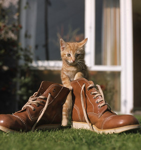 Puss in boots, 1978.
