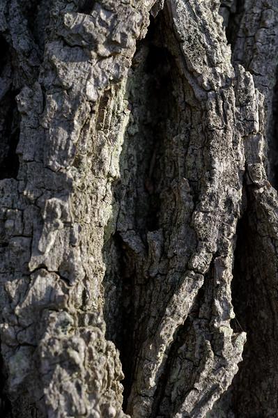 An oddly suggestive bit of  bark