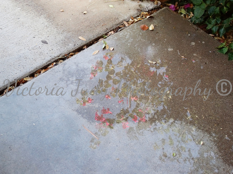 "Day 21<br /> <br /> Image 10<br /> <br /> ""Reflections of Bougainvillea"""