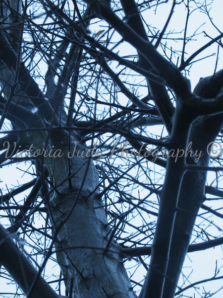 A Forest Of Twigs<br /> <br /> [Project 4 - Silhouettes and Shadows]