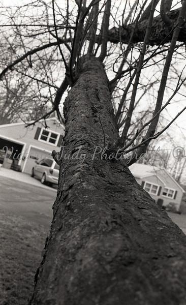 Climbing My Favorite Tree At Grama's House