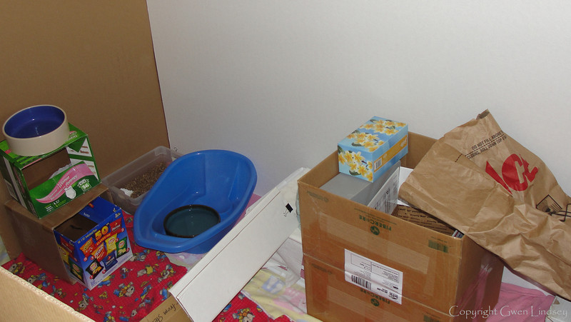 Stuff in the rat room. Cement pond inside a baby wash tub. Large boxes need careful placement of sturdy steps up to the top. Large litter box with Eco-bedding in the far back left corner.