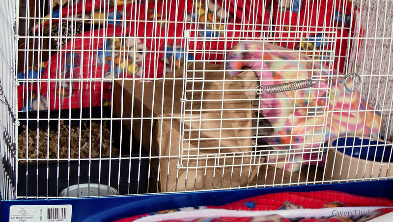 New rats' first cage. Small, contained, with litter box. Found 200 poops in it the first day!