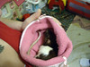 Flighty Rat Calms Down in a Cloth
