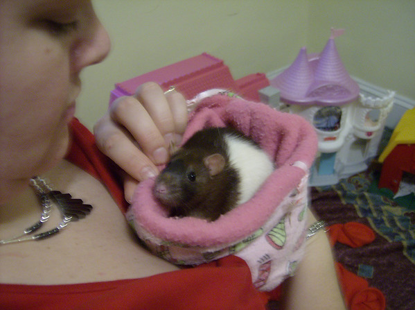 Flighty Rat Calms Down in a Cloth