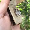 5.54ctw Edwardian Old European Cut Diamond Cluster Earrings 9
