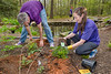 Ferns and small flowering plants being planted at the Walker Nature Center - Reston Association by employees from Leidos and JLL for Earth Day 2016.