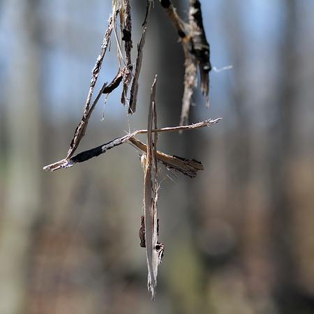 Cross, May 2020