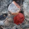 Detail of puddingstone boulder.<br /> <br /> Along the Huron River,<br /> October 2010