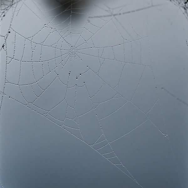 Spider web with dew - supports cropped away from the shot