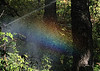 Rainbow in the forest.<br /> <br /> Mist from a sprinkler hung in the air and created this intermittent rainbow.  It was most intense during a brief part of the revolution of the sprinkler head.<br /> <br /> Woodland path to the Perennial Garden.<br /> Powell Gardens, Missouri.<br /> October, 2008