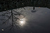 Sharon Mills - reflection of sun and tree