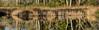 Rorschach #03 01<br /> D301-2016  <br /> Matthaei Botanical Garden<br /> Taken October 28, 2016