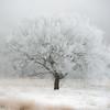 Winter's Cotton