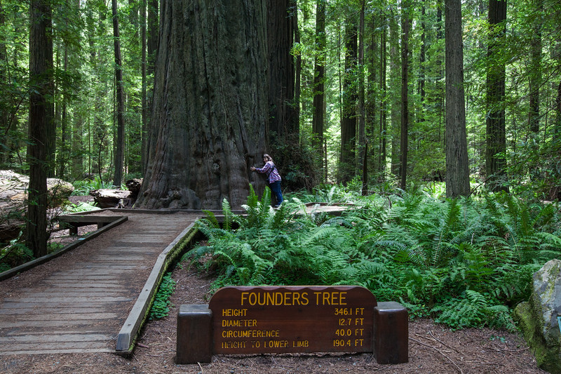 Lorna & the Founders Tree, Redwoods National Park