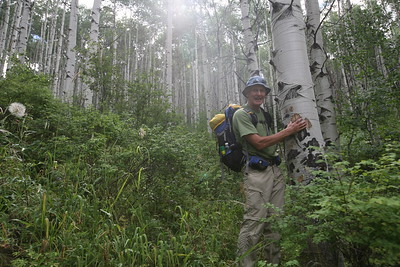 BEAVER CREEK, CO -  Guide Nick Fickling talks about this beautiful stand of Aspen trees in Aspen Grove.