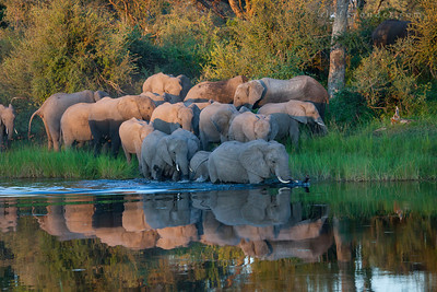 BWABWATA NATIONAL PARK, NAMIBIA - Driving safari.