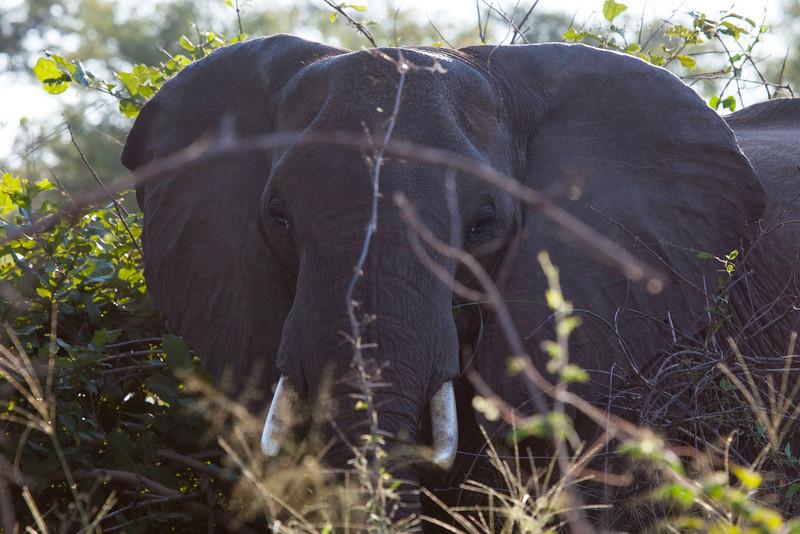 BWABWATA NATIONAL PARK, NAMIBIA - Elephant.