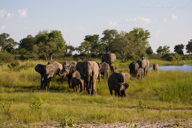 BWABWATA NATIONAL PARK, NAMIBIA - Elephants.