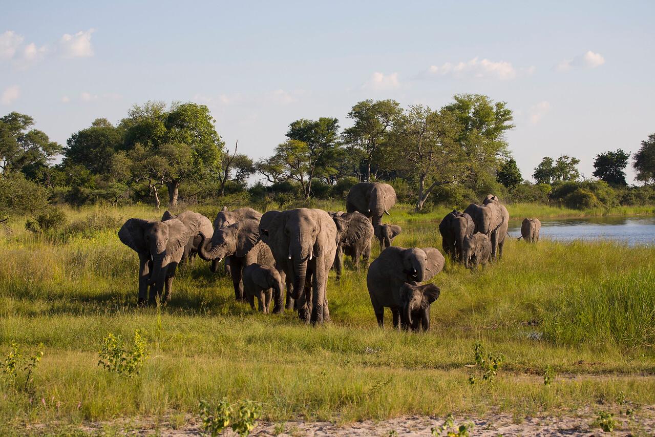 BWABWATA NATIONAL PARK, NAMIBIA - Elephants.