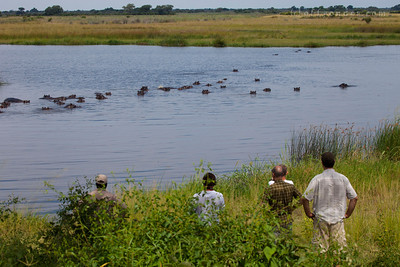 BWABWATA NATIONAL PARK, NAMIBIA - Dozens of hippos keep cool in the water.