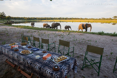HORSESHOE BEND, KWANDO RIVER, NAMIBIA - Sundowner (sunset drinks) hosted by Susuwe Island Lodge with elephants, hippos, baboons and impala all sharing the beach.