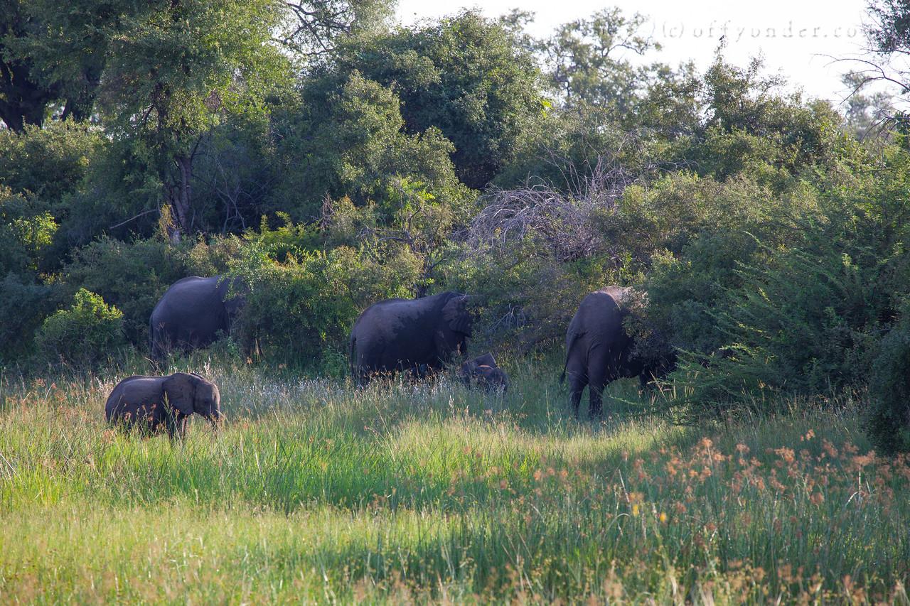 BWABWATA NATIONAL PARK, NAMIBIA - Elephants