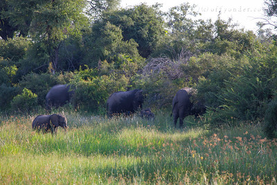 BWABWATA NATIONAL PARK, NAMIBIA - Elephants