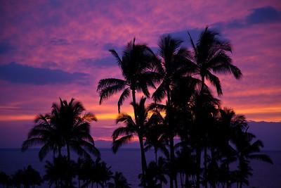 """""""Maui Colors"""""""