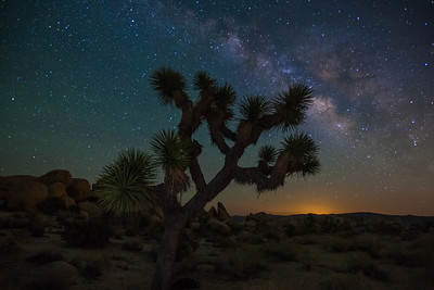 """Joshua Tree at Night"", Joshua Tree NationalPark"
