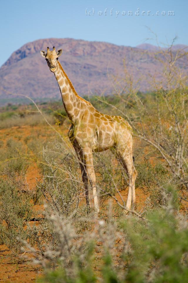 ATWS 2013 Swakopmund, Namibia