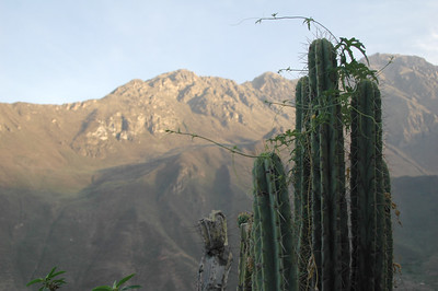 COLCA CANYON, PERU: Morning light with cactus.