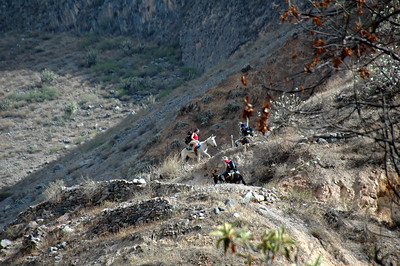 COLCA CANYON, PERU: Riding burrows out of the canyon late in the afternoon. It's only slightly quicker and cooler than hiking yourself out. But it will cost you 50 Soles.