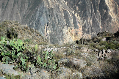 COLCA CANYON, PERU: Looking down into the canyon from the rim.