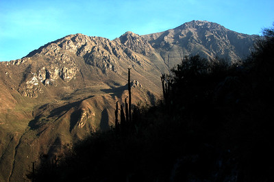 COLCA CANYON, PERU: Cacti silhouettes against the morning light on the western wall of the canyon.