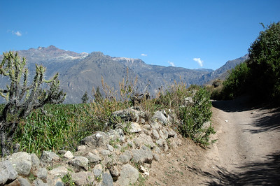 COLCA CANYON, PERU: The flat part of the trail through the fields of corn just beyond Cabanaconde heading towards the rim of the canyon.