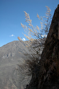 COLCA CANYON, PERU: Canyon wall plants.