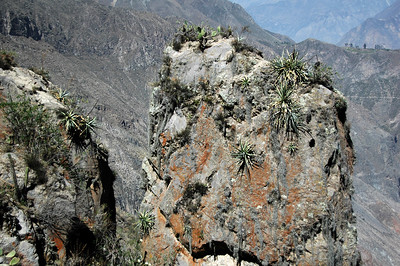 COLCA CANYON, PERU: Rock Pillar.