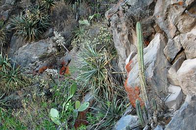 COLCA CANYON, PERU: Cactus garden.