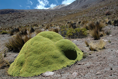 CHACHANI, PERU: A peculiar moss covered rock among the arid grass and shrubs on the slope of Chachani around 4,800m.