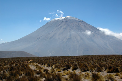 CHACHANI, PERU: El Misti and a heard of guanaco (Lama guanicoe) as we cross the 4,000m mark.