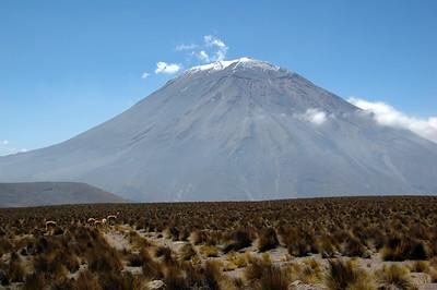 CHACHANI, PERU: El Misti and a heard of guanaco (Lama guanicoe) as we cross the 4,000m mark.