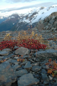 Hardy plants making it work in the alpine zone.