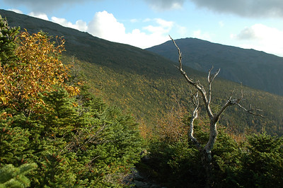 Nice light on the trees along Gray Knob Trail as I make my rounds towards The Perch.