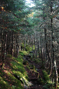 A sudden burst of sunlight through the trees as I work my way up Randolph Path from Log Cabin to The Perch.
